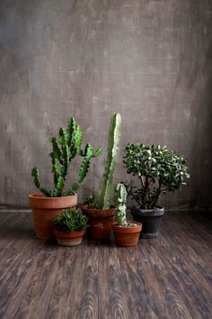 Pretty Plants, Cool Places and Friends - An update from Clever Bloom #cacti #succulents #jade #homedecor