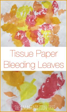 Tissue paper bleeding leaves Fall art project for kids