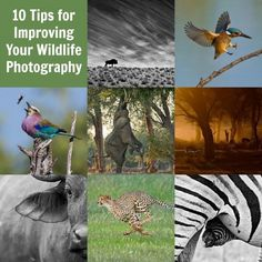 10 Tips for Improving Your Wildlife Photography - Digital Photography School