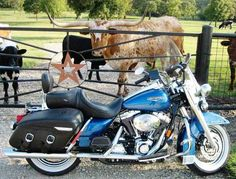 2005 HARLEY-DAVIDSON ROAD KING CLASSIC in Texas