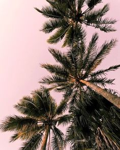 Instagram post by N E O N • D I V E • B A R • Apr 12, 2017 at 4:37pm UTC - https://www.instagram.com/p/BSytGzmgWLI/?taken-by=neondivebar&utm_campaign=coschedule&utm_source=pinterest&utm_medium=Russell%20Street