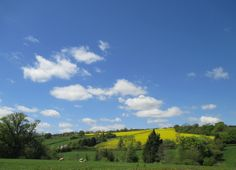 Wonderful Late spring day photographed by Anthony J Sargeant from the garden of his Shropshire home on the May Here the rape can be seen brightening the landscape with its brilliant lemon yellow. Spring Day, Landscape Photographers, Color Splash, Photographs, Clouds, Lemon Yellow, Videos, Garden, Sheep