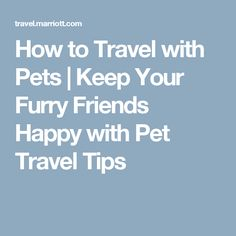 How to Travel with Pets   Keep Your Furry Friends Happy with Pet Travel Tips