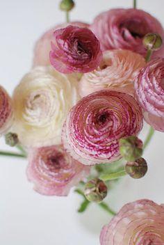 Hildemihos blomster