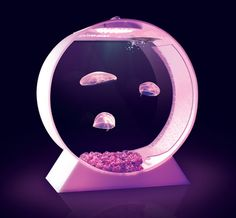 Desktop Jellyfish Tank...so much awesome in such a small container!