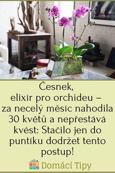Česnek, elixír pro orchideu – za necelý měsíc nahodila 30 květů a nepřestává kvést: Stačilo jen do puntíku dodržet tento postup! Garden Club, Herbs, Plants, Herb, Flora, Plant, Planting