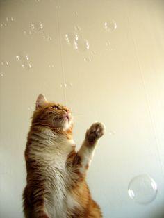 Peach against the bubbles (por Sunfox)