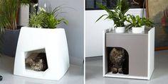 2 en 1....Macetero y casa para gato