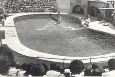Playcenter - Show de golfinhos