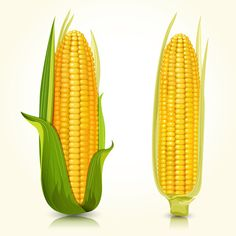 Illustration of Ripe corn on the cob vector art, clipart and stock vectors. Vegetables Names With Pictures, Vegetable Pictures, Fruit And Veg, Fruits And Vegetables, Vegetable Illustration, Garden Labels, Food Clipart, Art Through The Ages, Fruit Photography