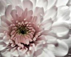 Floral photography - Floral fancy - mylusciouslife.com - romantic white flower.jpg