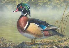 Wood Duck - Robert Hautman