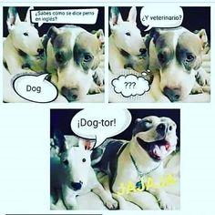 Buen comienzo de semana! Para turnos o consultas llamar al teléfono 4233-8978 o x msj in-box Seguinos en Twitter #alaguaperro #nocompresadopta #happydog #perrofeliz #dog #longchamps #peluqueriacanina #esteticacanina #feliz #dogsofinstagram #dogplaying #nolopeles #responsabilidad #perro #perrojugando #cutedogs #dog by alaguaperro bit.ly/teacupdogshq