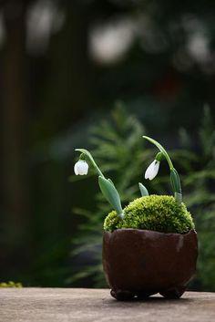 アッツザクラとかフウランとかの画像 | チョコレート盆々 Mini Bonsai, Bonsai Art, Bonsai Garden, Mini Plants, Indoor Plants, Plant Design, Garden Design, Arrangements Ikebana, Moss Plant