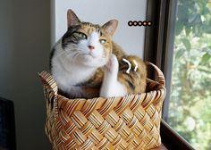 里親さんブログ寛いでたのに - http://iyaiya.jp/cat/archives/81067