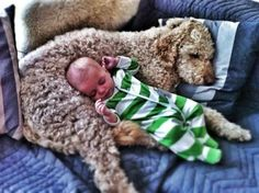 that baby looks cute an all.but that dog looks like the most comfortable pillow ever! Cute Dog Pictures, Funny Animal Pictures, Animal Pics, Animals For Kids, Cute Animals, Cute Kids, Cute Babies, Comfortable Pillows, Red Dog