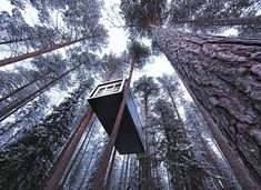 Up, up, up in the tree! Amazing hotel room in Sweden Designer Hotel, Oh The Places You'll Go, Places To Visit, Cool Tree Houses, Tree House Designs, Sauna, In The Tree, Destinations, Best Hotels
