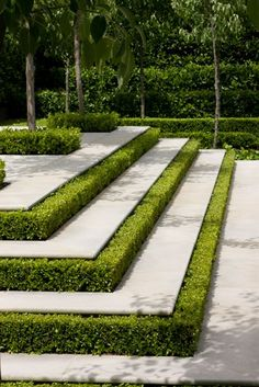 This step landscaping is very eye pleasing. However, it could be dangerous if you step on the hedge and not the concrete, as you're descending. One could get very hurt.
