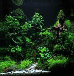 67 best aquaria images fish tanks aquarium design aquarium ideas rh pinterest com
