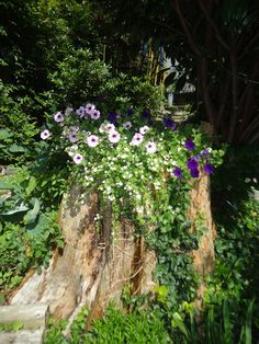 18 Old Tree Stumps Turned Into Beautiful Flower Planters Did you recently have a tree cut down on yo Tree Stump Decor, Tree Stump Planter, Tree Stumps, Lawn And Garden, Garden Art, Garden Design, Garden Ideas, Patio Planters, Flower Planters