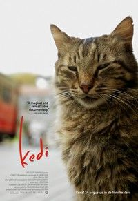 Discover the documentary Kedi aka Nine Lives: Cats in Istanbul. Lots of cat photos! Streaming Movies, Hd Movies, Movies To Watch, Movies Online, Movies And Tv Shows, Movie Tv, Rent Movies, Movie Songs, Hd Streaming