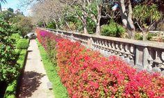 Jardim Botânico da Ajuda, Belém, Lisboa, Portugal