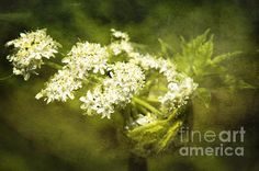 Expansion by Belinda Greb  #flowerphotography #wildflowerphotography #photography