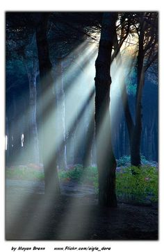 ✯ Little forest of Campana - Lazio, Italy
