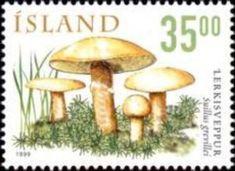 Sello: Mushrooms (Islandia) (Mushrooms) Mi:IS 915,Sn:IS 881,AFA:IS 900