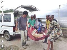 Malika in Nepal verricht wonderen voor de dieren! Zij is zo goed bezig en verdient echt onze hulp. Waarschijnlijk herinner je het nog, dat wij nog niet zo heel lang geleden een extra project hebben gewijd aan Nepal. Dat was vrijwel direct na de grote aardbeving. Gelukkig werd er gul gedoneerd voor de dieren. Maar …