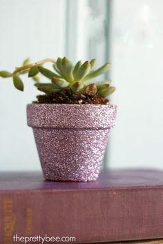 A festive and easy gift: diy succulents in glittered pots. DIY project - plant succulents in tiny terra cotta pots that have been embellished with glitter. Glitter Projects, Glitter Crafts, Glitter Party, Pink Glitter, Glitter Lipstick, Glitter Hair, Glitter Walls, Glitter Outfit, Glitter Converse
