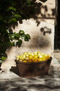 lemons at Zetas Finsmakerens Trädgård | Victoria Skoglund
