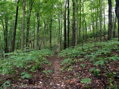 Scenic River Trail in Wayne National Forest | http://trekohio.com/2013/02/20/scenic-river-trail-in-wayne-national-forest/