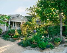 Edible front yard garden.  http://gracedesignassociates.com/