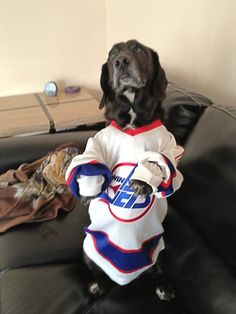 Thanks to Twitter follower @Tan_Addict showing off her Basset Hound. #hockeypets