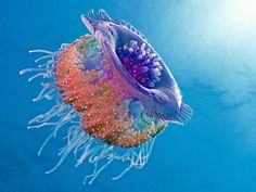 Just a jellyfish? Self replicating  beauty with colors that it can never see itself. This simple creature is not so simple.