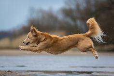 https://flic.kr/p/EADzmb | dog in flight