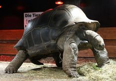 Both turtles and tortoises have webbed feet