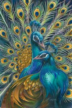 Peacock More