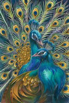 Peacock                                                                                                                                                      More