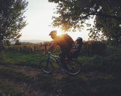 Ecco l'autunno! Una pedalata in #carso tra le vigne.. #mtb #trieste #travel @TriesteSocial @UlisseFIAB @TheLadyBike
