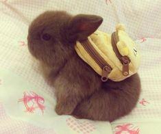 I love animals specially a bunny. They are so cute. I so wish i had a bunny. actually mom if u read this i want a BROWN BUNNY for my birthday. Cute Little Animals, Cute Funny Animals, Cute Creatures, Cute Bunny, Tiny Bunny, Adorable Bunnies, Box Bunny, Pet Bunny Rabbits, Bunny Pics