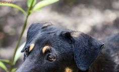 Armadilhas com cianeto provocam a morte de animais domésticos e selvagens nos EUA