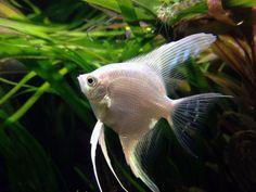 Ikan hias aquascape via aquaticmag.com