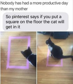 I wish I had a cat just so that I could try this...and to scare with a cucumber