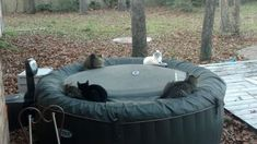 #Cats  #Cat  #Kittens  #Kitten  #Kitty  #Pets  #Pet  #Meow  #Moe  #CuteCats  #CuteCat #CuteKittens #CuteKitten #MeowMoe      Spotted these guys staying warm on my hot tub ...   http://www.meowmoe.com/40760/