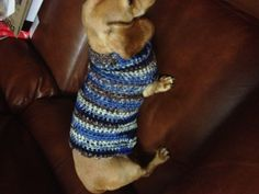 Crocheted sweater for my dog