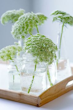 ✿ ❀ Queen Anne's Lace