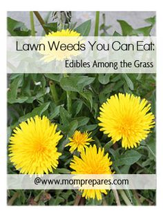 Lawn Weeds You Can Eat: Edibles Among the Grass