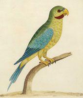 The Antiquarium - Antique Print & Map Gallery - Birds